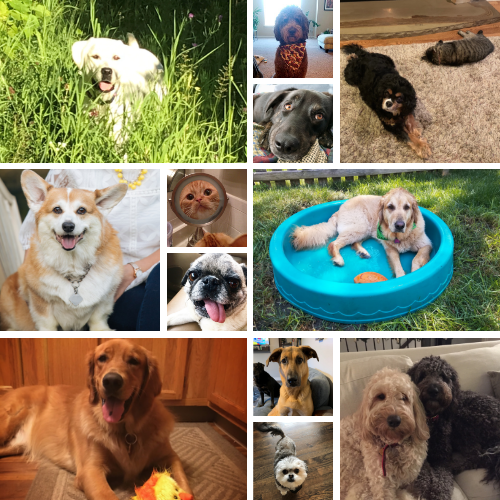 Celebrate National Love Your Pet Day 2019!